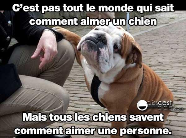 amour des chiens